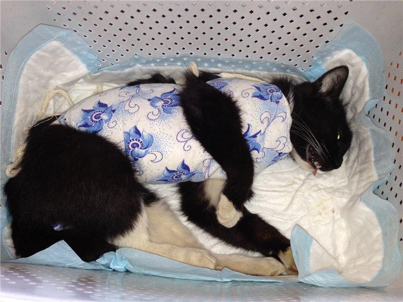Стерилизация кошки и собаки: виды стерилизации животных