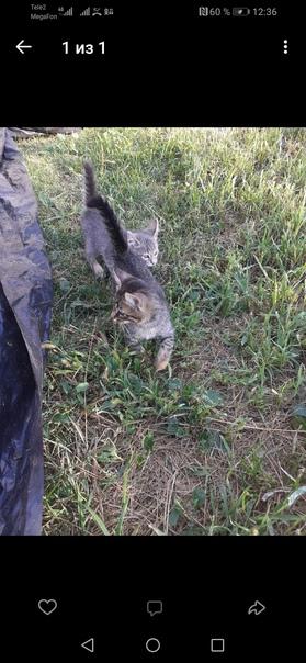 Как назвать котёнка - имена и клички для кошек