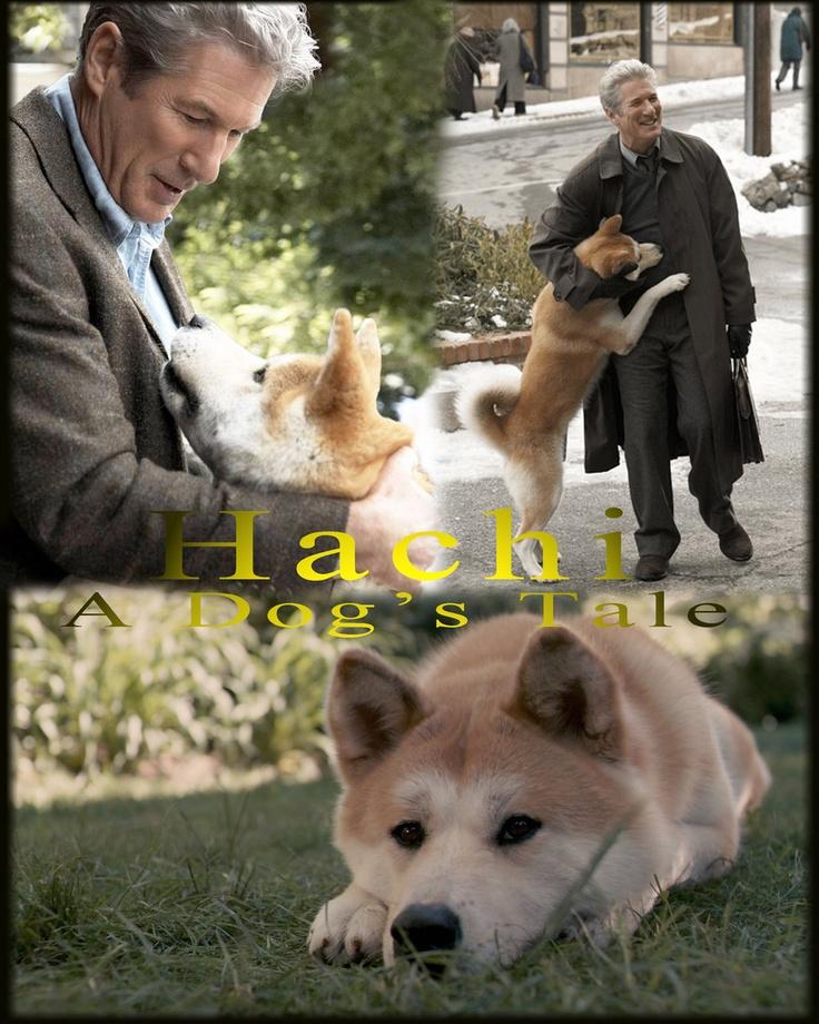 Хатико порода собаки - акита-ину: фото собаки, цена, описание породы, характер, видео хатико порода собаки - акита-ину: фото собаки, цена, описание породы, характер, видео