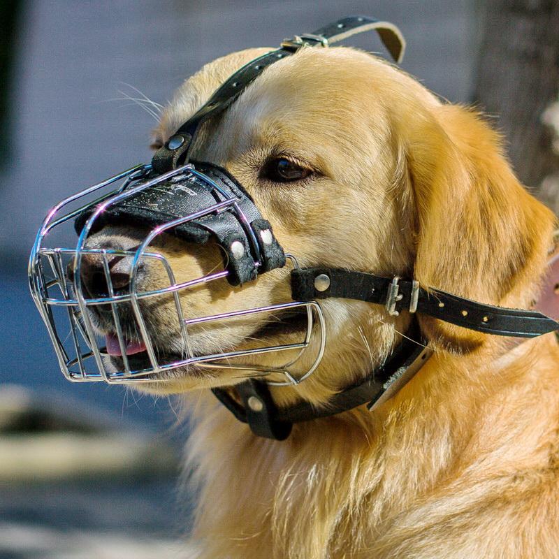 Как подобрать намордник собаке