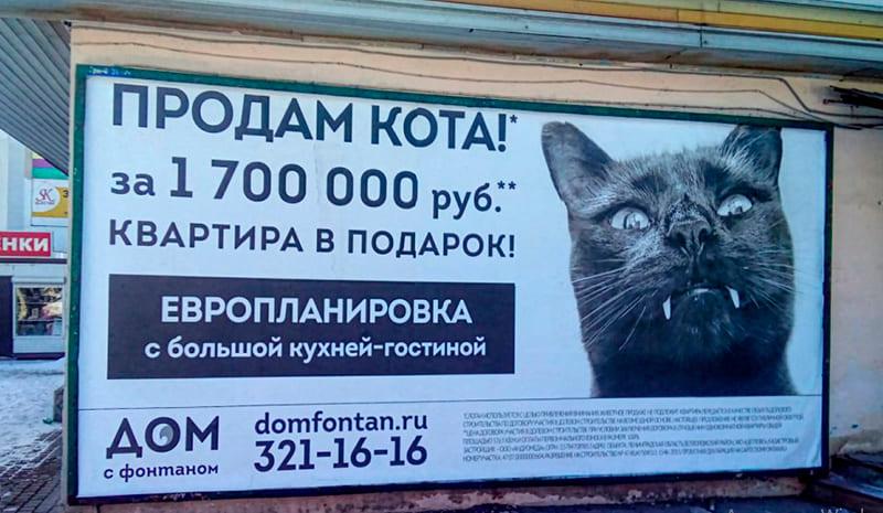 Несколько советов, которые помогут быстро продать котят. как продать породистых котят? что следует писать в рекламе