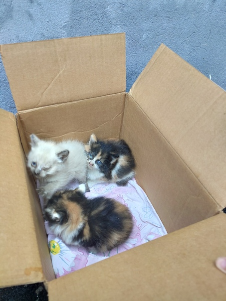 Как пристроить котят, если их никто не берет и они не нужны хозяину кошки или найдены на улице, куда их деть?