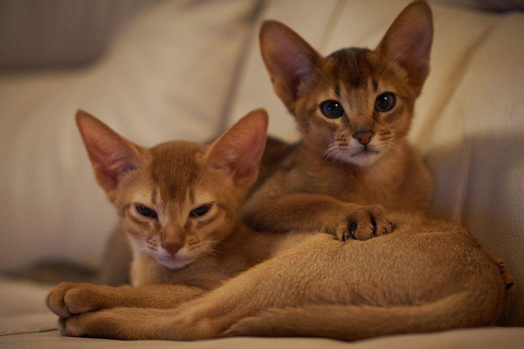 Самые ласковые и добрые кошки
