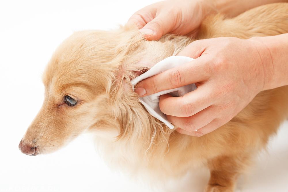 Хорошее средство для чистки ушей собакам