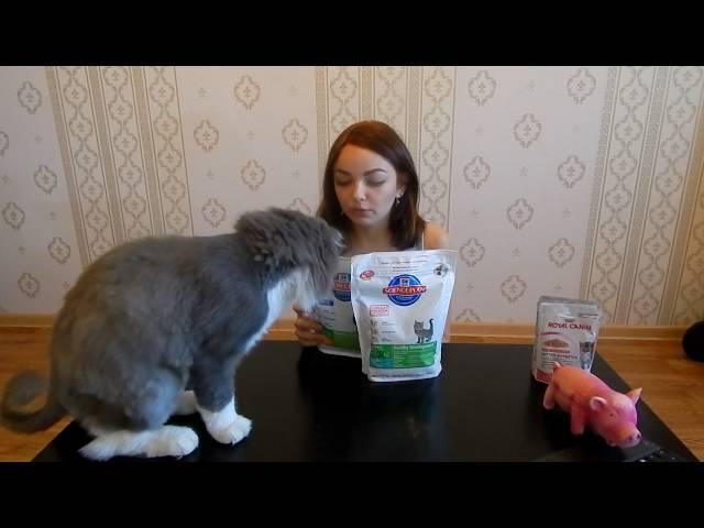 Корм для шотландских кошек: чем лучше кормить котят-шотландцев? можно ли давать им сухой корм премиум-класса? как выбрать жидкий корм для кастрированного кота?