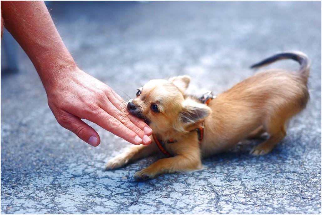 Что делать, если собака кусается? как отучить щенка кусать за ноги и руки: способы дрессировки и профилактические меры - автор екатерина данилова - журнал женское мнение