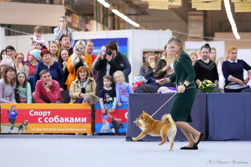 Новогодний бал в нюрнберге (интернациональная выставка собак в германии)