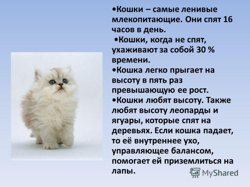 Самые ласковые породы кошек. топ 13 пород(фото и описание)
