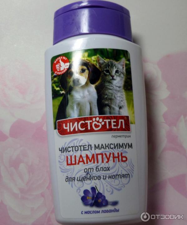 Блохи у кошек - ветеринарные статьи специалистов клиники «джунгли»