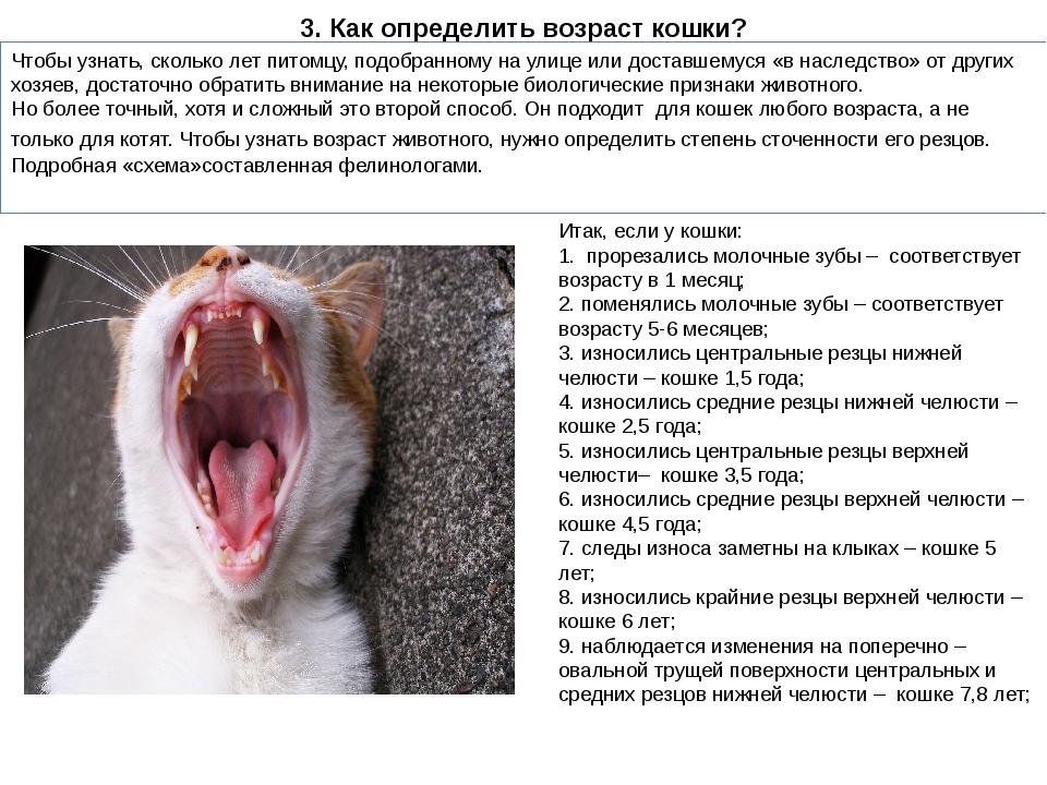 Болезни зубов у кошек (симптомы) - лечение в клинике зоостатус