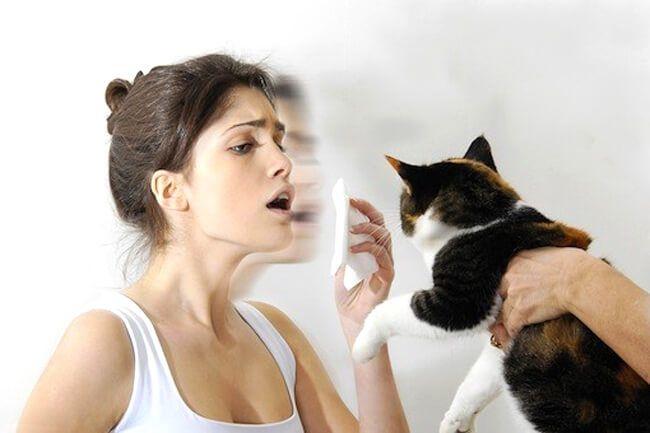 На пути к пушистому счастью: как предотвратить аллергию на кошек – у  ребенка или взрослого