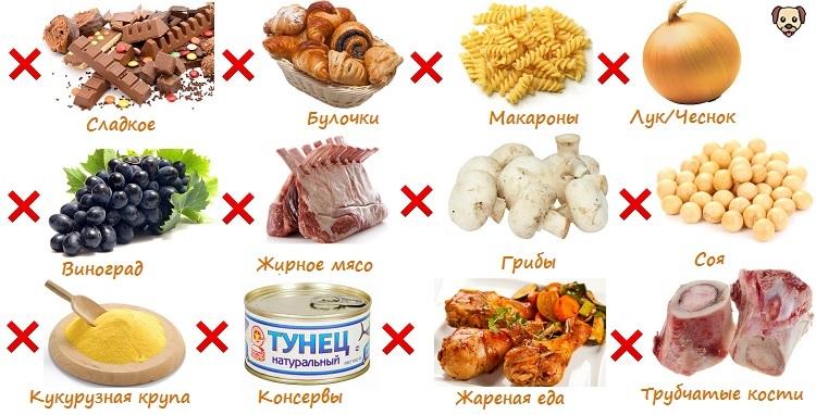 Чем кормить мопса - руководство по здоровому питанию