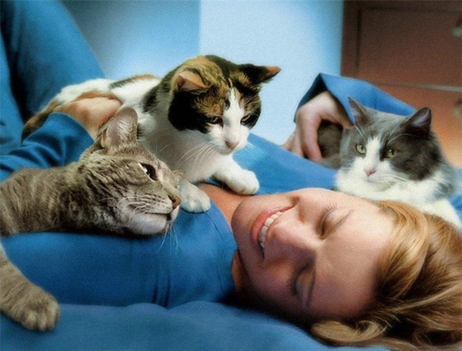 Влияние кошки на здоровье человека. позитивное влияние кошек: 5 интересных фактов