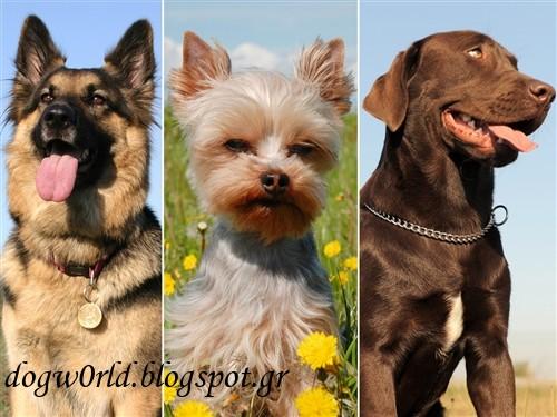 Собаки для охраны частного дома: 5 лучших пород собак для защиты вашего имущества