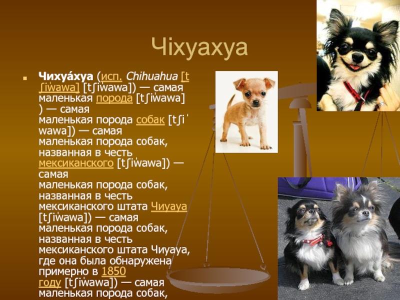 Клички для собак-девочек   красивые имена, как назвать