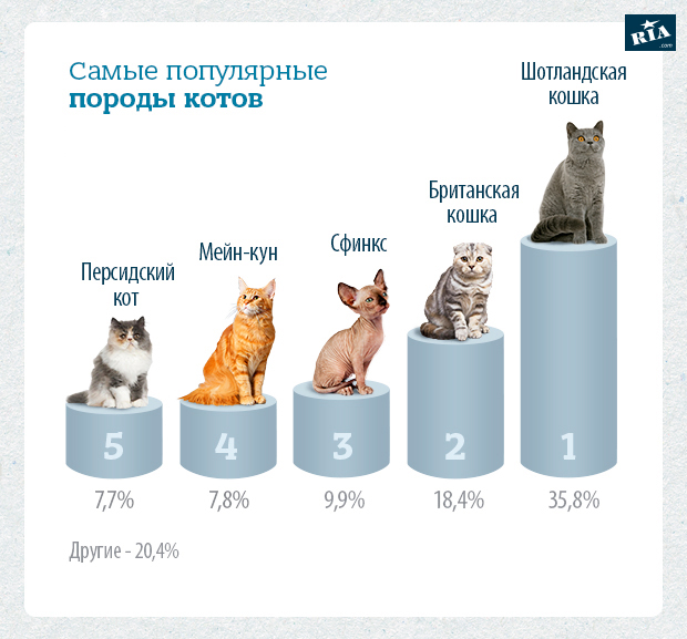 Опухоли селезенки у собак и кошек