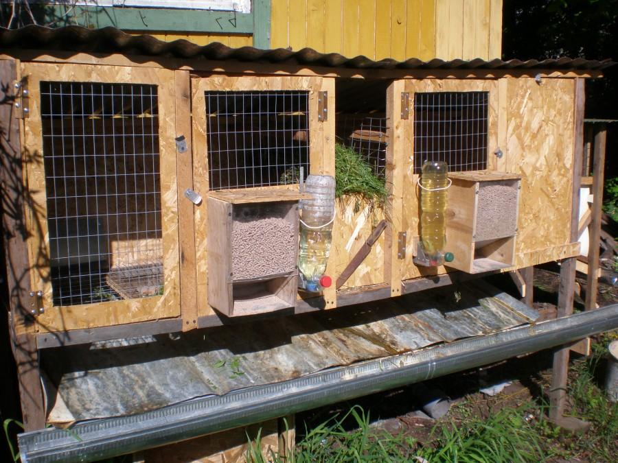 Разведение кроликов в домашних условиях для начинающих — finfex.ru