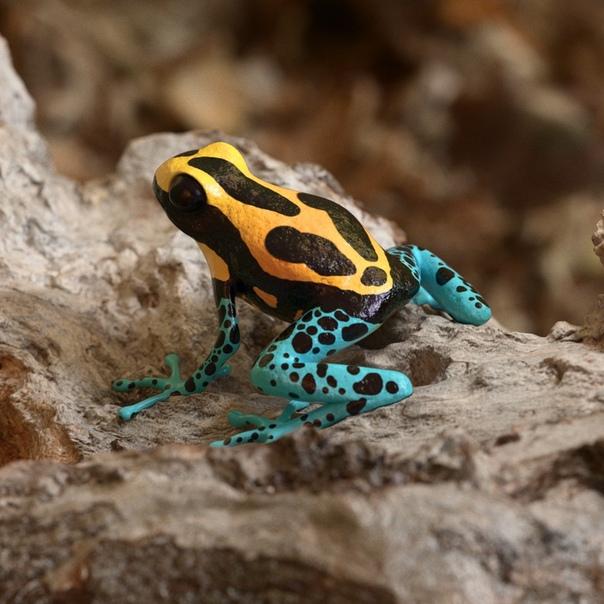 Самые красивые лягушки в мире - 30 фото