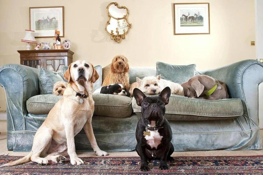 Собаки для детей в квартире и частном доме