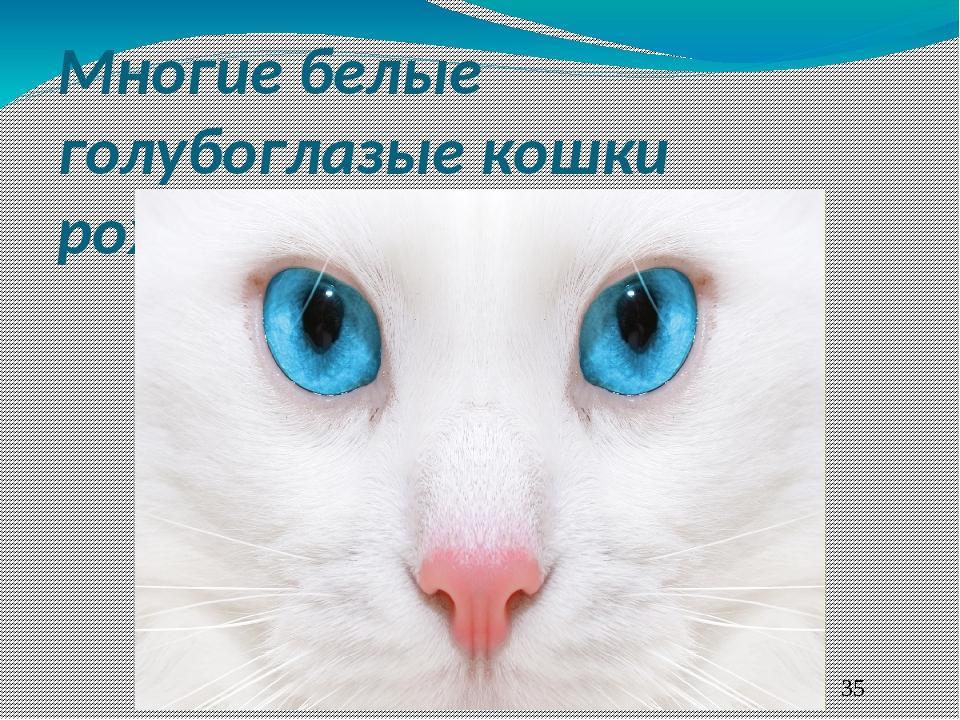 Знали ли вы, что белые кошки страдают глухотой