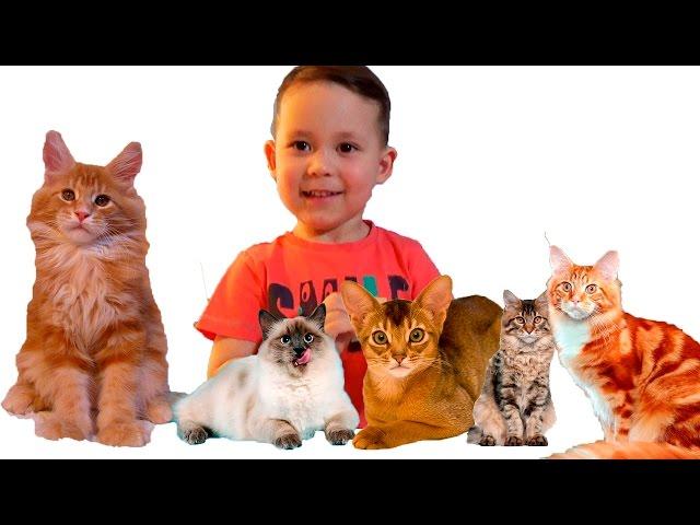 Какого котенка выбрать для ребенка?