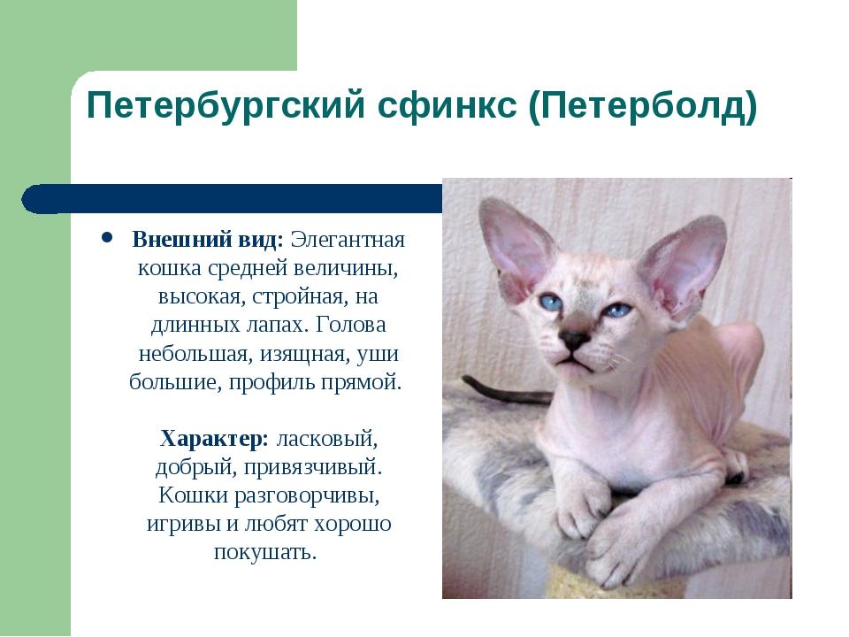 Порода кошек канадский сфинкс: 115 фото, особенности характера и необходимая кошке забота