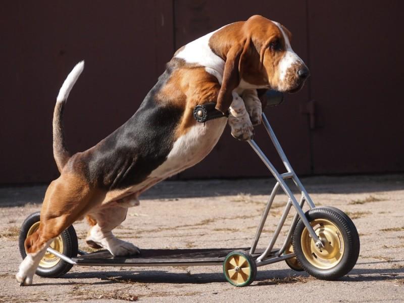 Самые глупые породы собак — топ-10 с фото