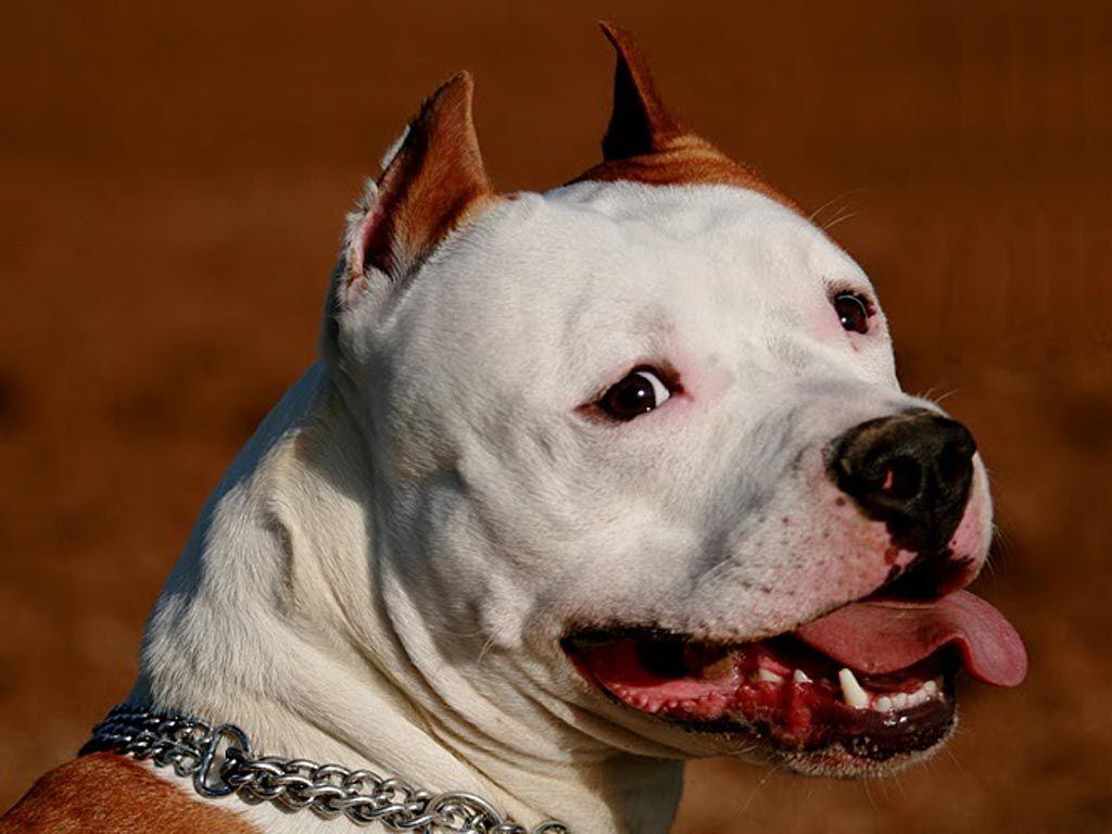 ᐉ у какой породы собак самый сильный укус? - zoomanji.ru