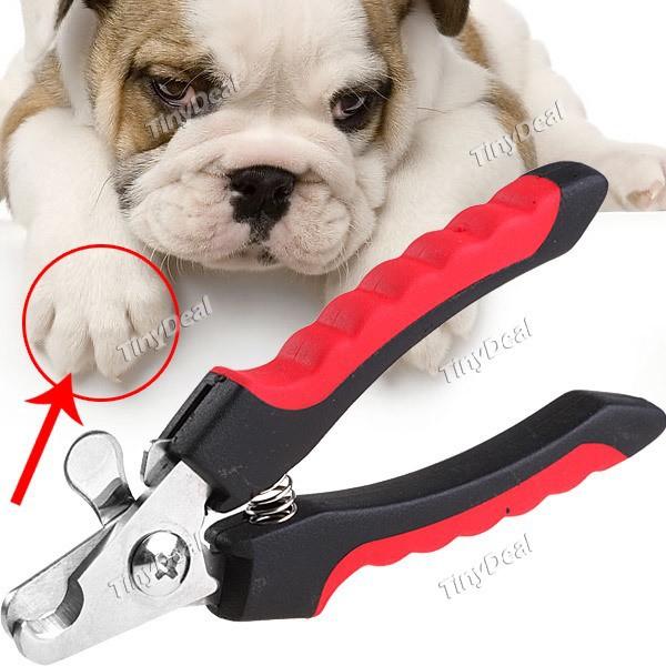 Как правильно подстричь когти собаке когтерезкой в домашних условиях, зачем это нужно и как часто делать