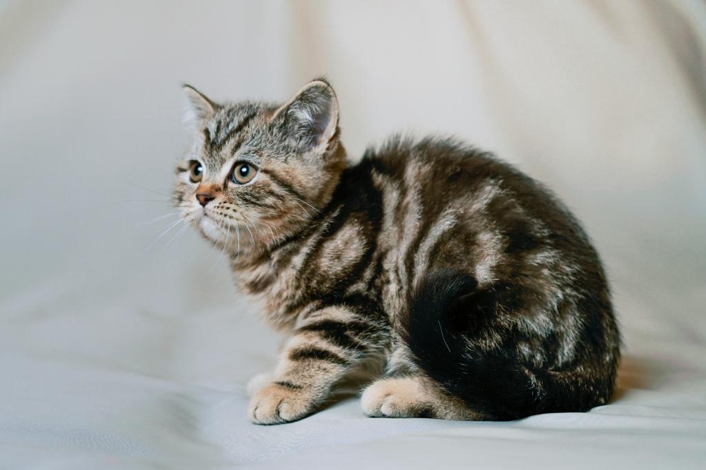 Кошки редких окрасов - черепаховый, шоколадный, леопардовый, тигровый, мраморный, серебристый, золотистый, голубой, лиловый, пятнистый окрас