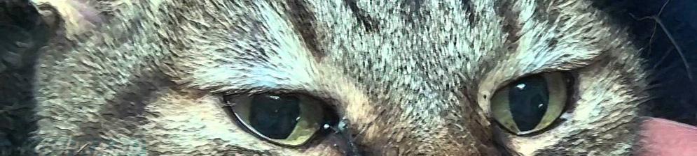 У кошки или собаки опух и слезится глаз: что делать? - здоровье животных | сеть ветеринарных клиник, зоомагазинов, ветаптек в воронеже