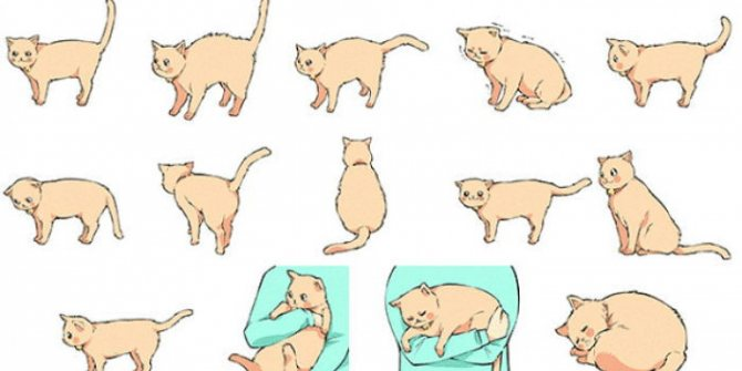Как отучить кошку таскать котят в другое место?