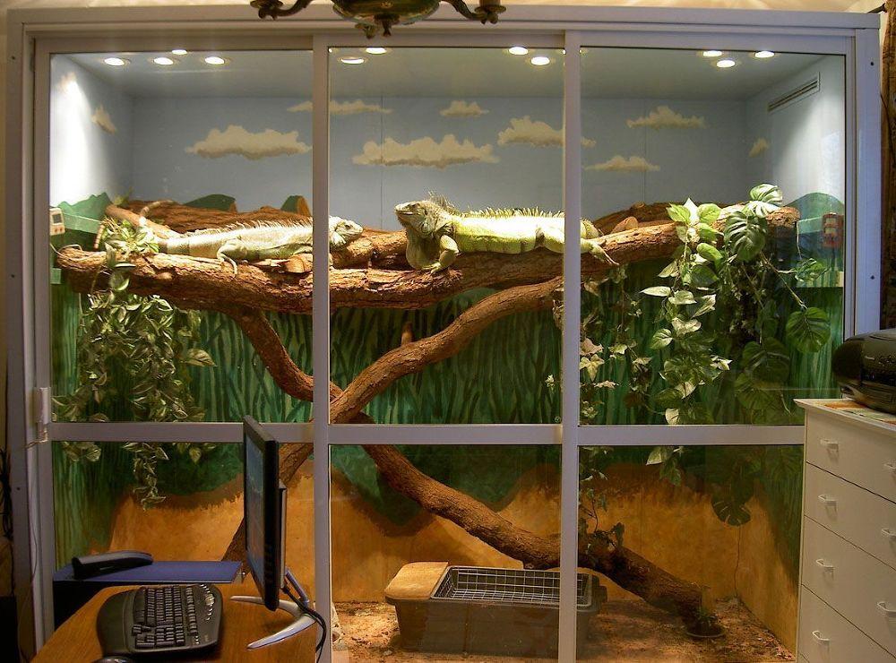 Террариум для хамелеона своими руками: пошаговое изготовление