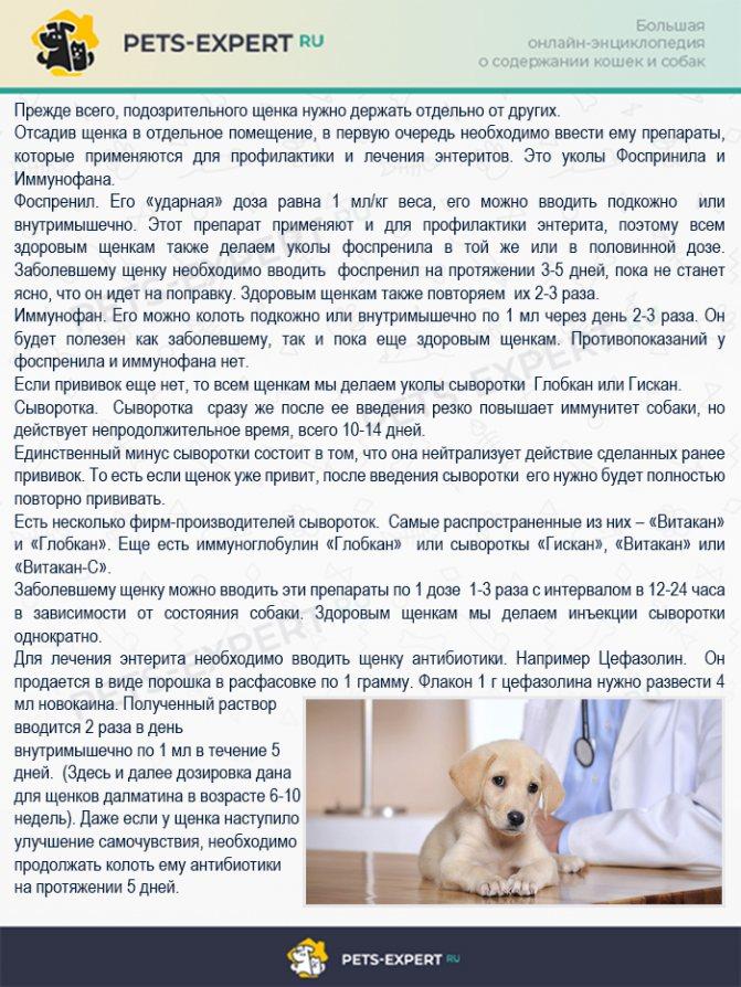 Запор у собаки - что делать в домашних условиях