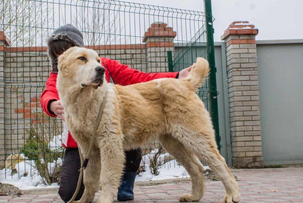 Как выбрать собаку для охраны частного дома? советы и рекомендации заводчиков