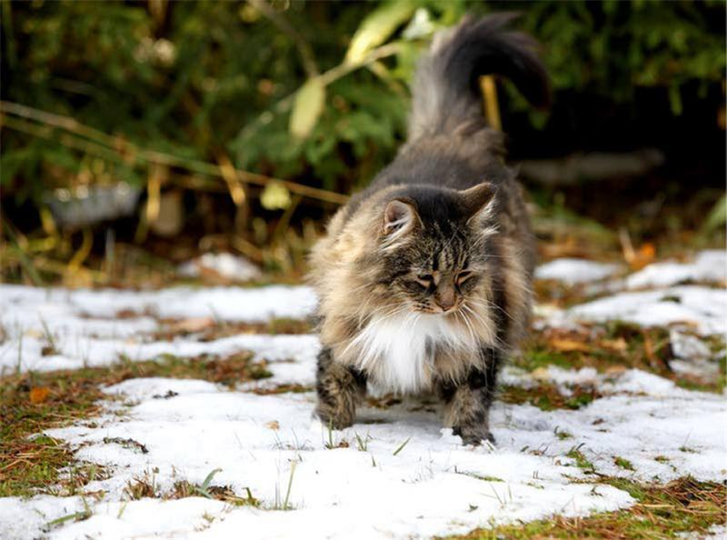 Природные барометры: как животные предсказывают погоду?