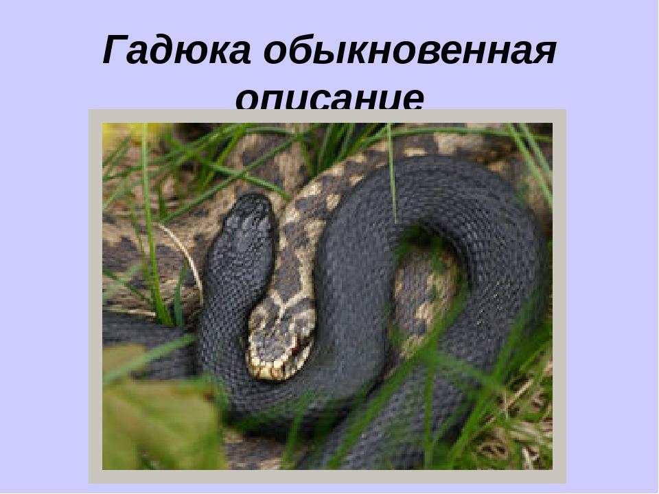 Самые ядовитые змеи в мире. ядовитые змеи россии