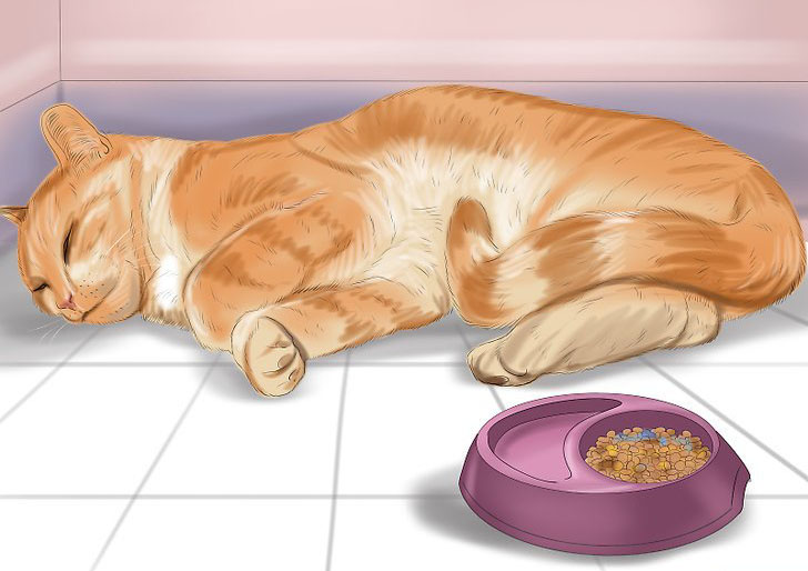 Почему кошка не кушает ничего. сколько кошка может прожить без еды и воды