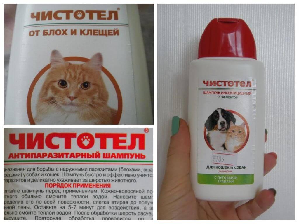 Топ-10 лучших шампуней для кошек