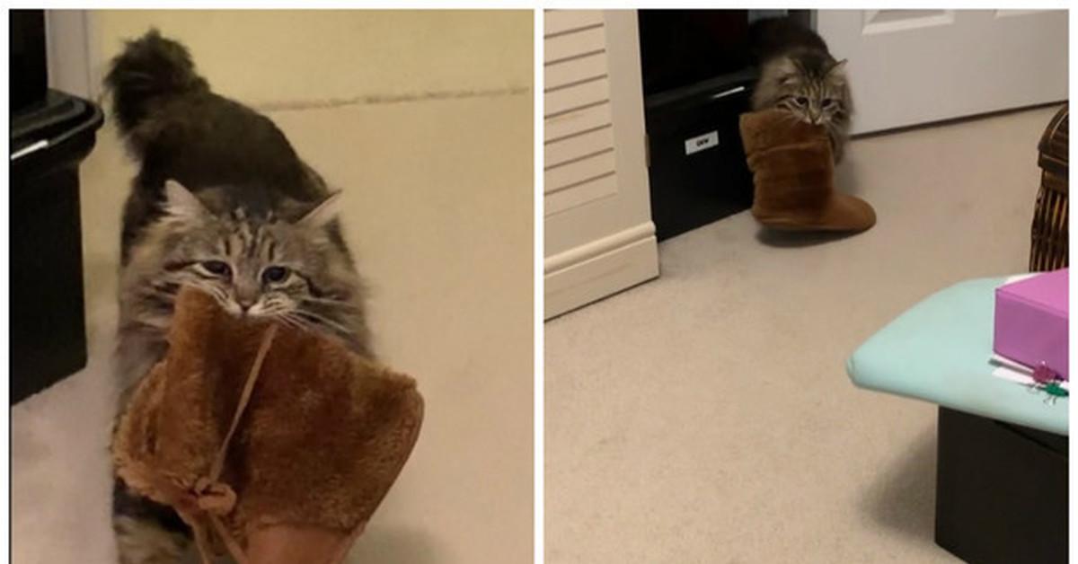 Советы для хозяев кошек: как быстро приучить котенка ходить в лоток