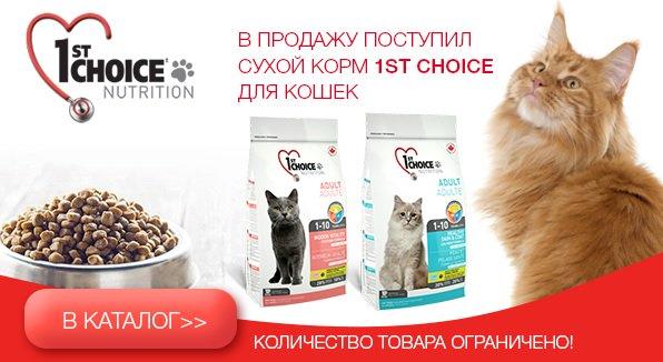 Какой корм для кошки лучше — обзор лучших сухих, влажных, натуральных кормов по цене и качеству по мнению экспертов