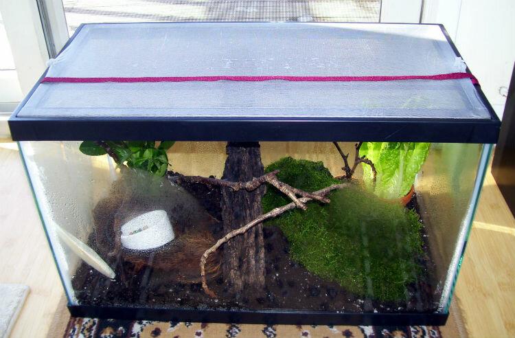 Террариум для улиток (29 фото): как выбрать домик? как обустроить пластиковый контейнер и стеклянный аквариум своими руками?