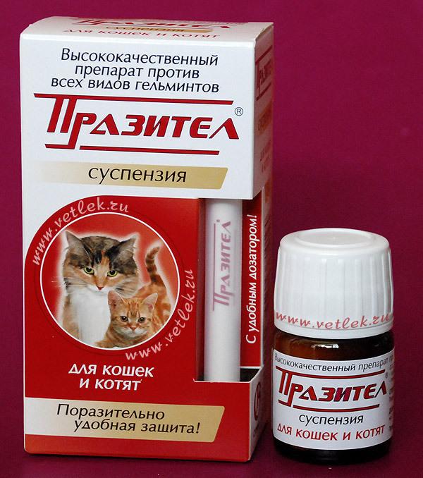 10 препаратов от глистов (антигельминтных) для собак: таблетки, капли, уколы - kotiko.ru