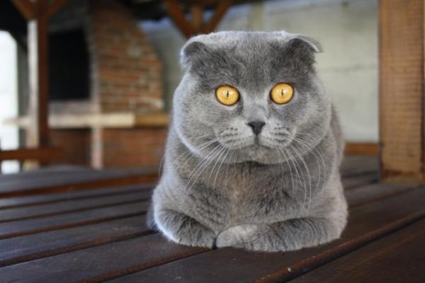 Почему кошка мяукает у двери?