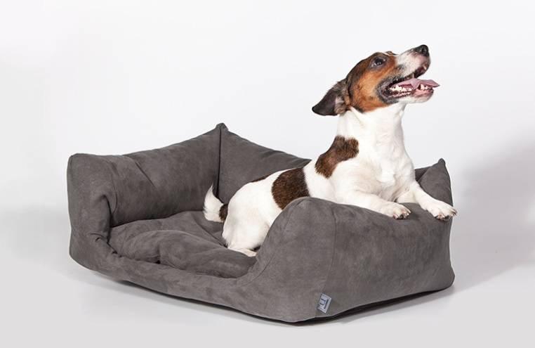 Лежаки и домики: самые необычные товары для собак