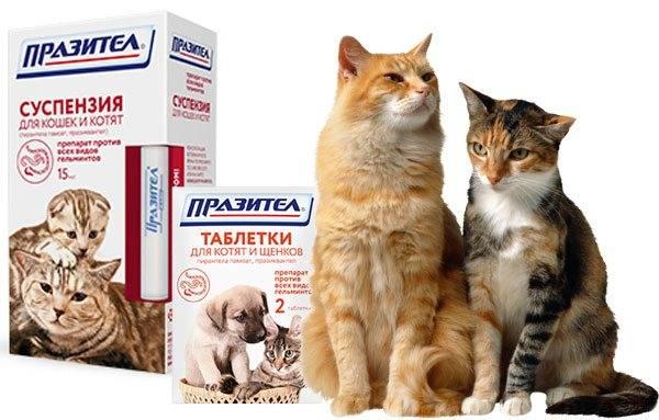 """Беременность у кошек - признаки, сколько времени длится, забота о кошке в москве. ветеринарная клиника """"зоостатус"""""""