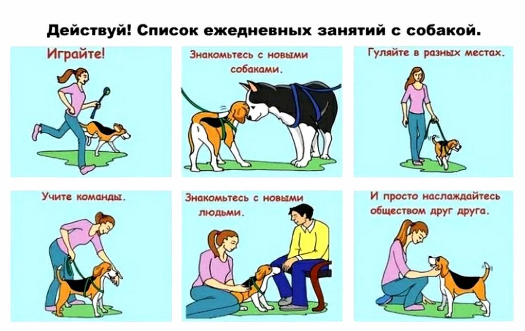 Дрессировка собак: как тренировать животное, выбор кинолога или самостоятельные занятия, основные правила и ошибки