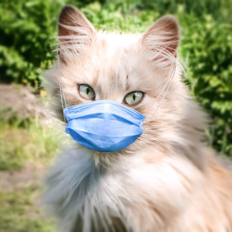 Как восстановить легкие после коронавируса | публикации – клиника «семейный доктор»