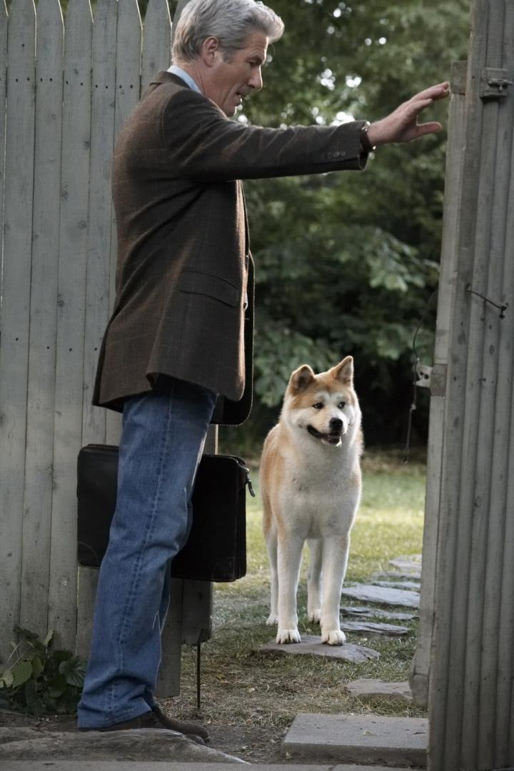 Порода собаки изфильма «хатико»