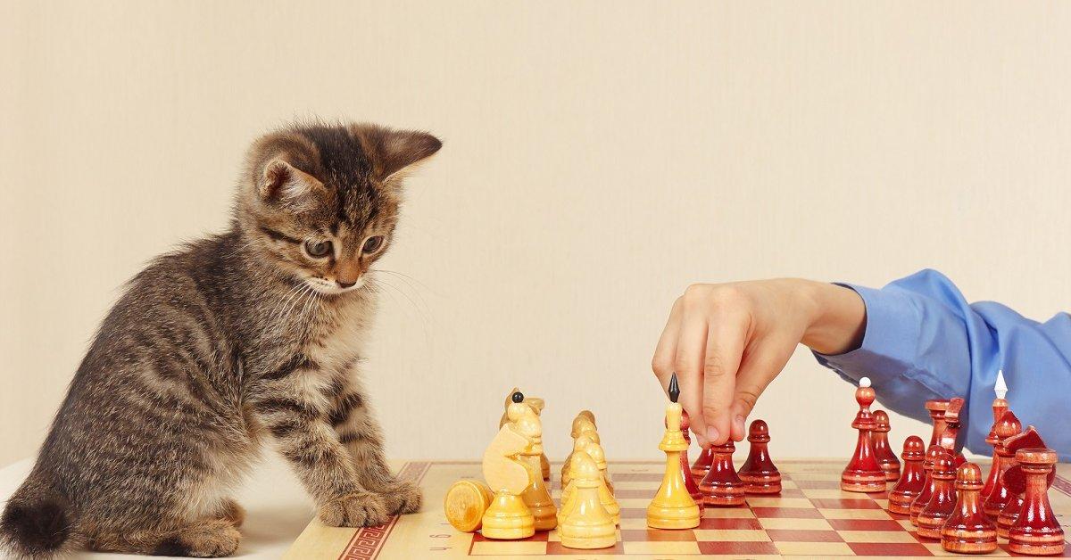 Во что поиграть с котенком